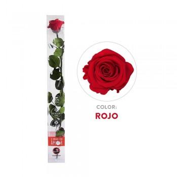 Rosa preservada roja - Envío gratis en 24 horas
