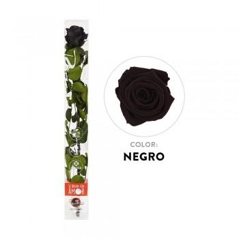 Rosa negra preservada - Envío gratis en 24 horas