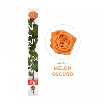Rosa naranja preservada - Envío gratis en 24 horas